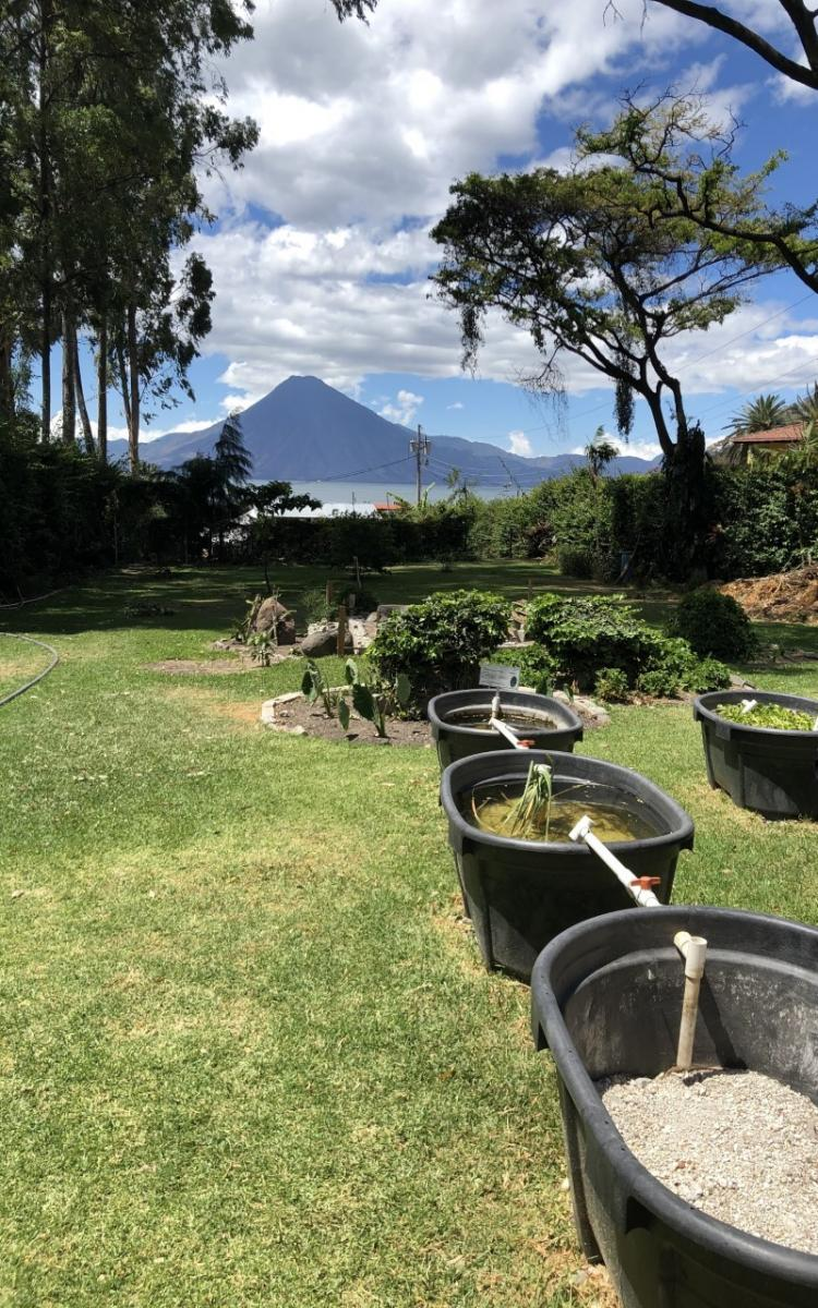 Plant mediation at the Amigos de Lago research facility