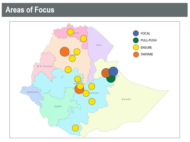 Project Areas of Focus
