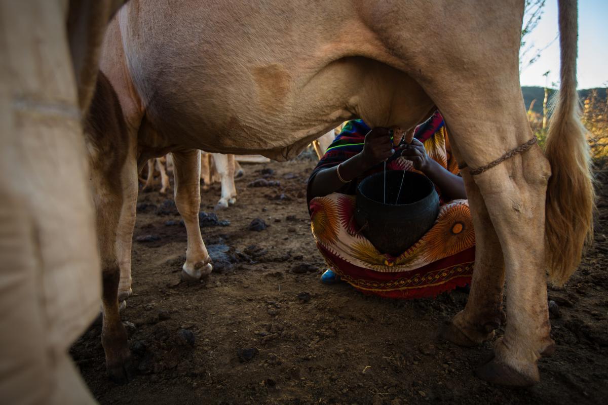 Ethiopia Dairy