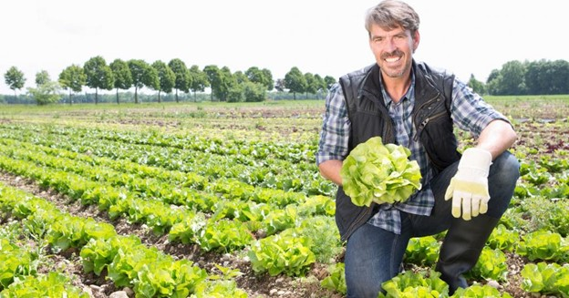 man in lettuce field