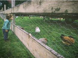 backyard chickens - Photo by Rowan S on Unsplash